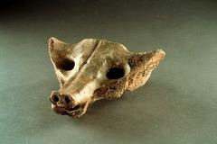 3. Camelid sacrum