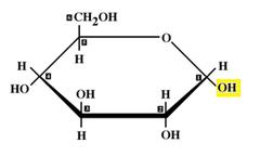 alpha glucose