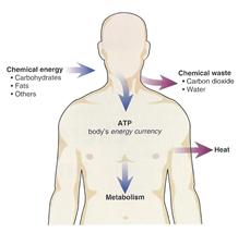 bioenergenetics