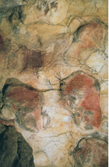 Bison, detail of a painted ceiling in the cave of Altamira, Spain