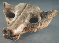 Camelid sacrum in the shape of a canine tequixquiac central mexico 14,000 to 7000 bce bone
