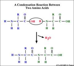 Condensation Reaction