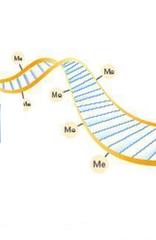 DNA methylation
