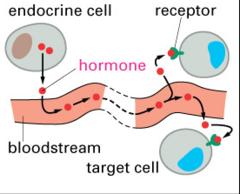 endocrine signaling