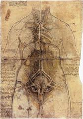 Female Anatomy by Leonardo Da Vinci  1510