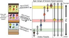 fossil correlation
