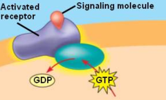 G-protein-linked receptor