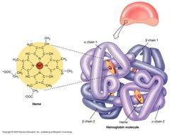 Globular Proteins