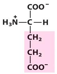 Glutamic acid