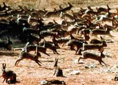 invasive species