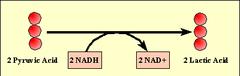 lactic acid fermetation