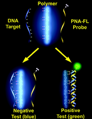 nucleic acid probe