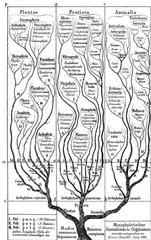 phylogeny