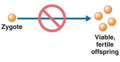 postzygotic barriers
