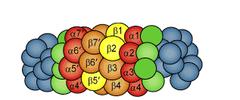 proteasomes