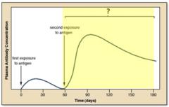 secondary immune response