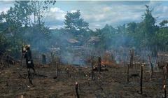 Slash-and -Burn Farming