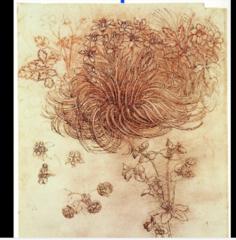 Star of Bethlehem Drawing by Leonardo Da Vinci  1508