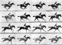 The Horse in Motion. Muybridge. 1878. Albumen print