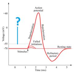 threshold potential
