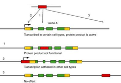 transposable genetic element