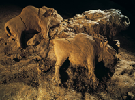 Two bison, reliefs in the cave at Le Tuc d'Audoubert, France