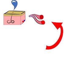 vasodialation