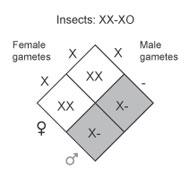 XO system
