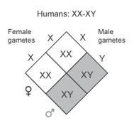 XY system