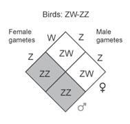 ZW system
